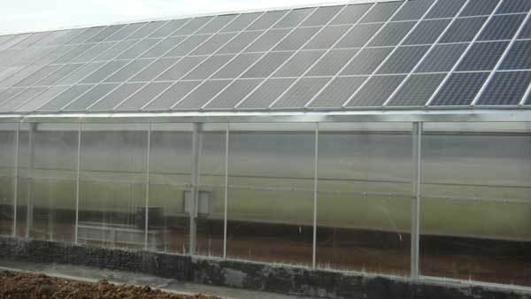 光伏农业大棚的主要特点及效益介绍-新闻-能源资讯