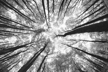 气候变化令美国树种西迁