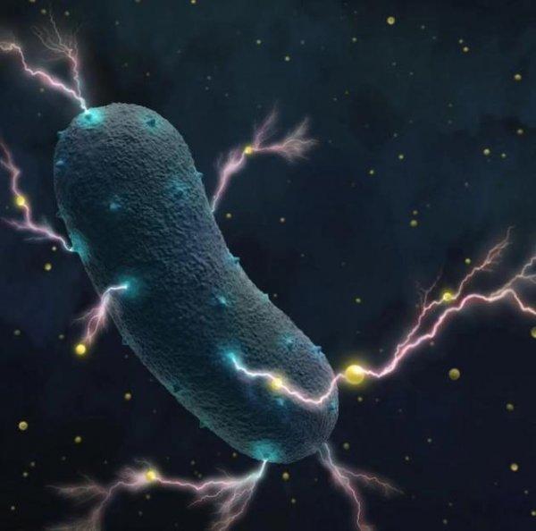 """人体肠道细菌可以""""发电"""":主要目的是制造能量"""